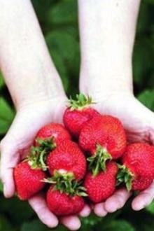 刘家峡,太极岛,摘草莓一日游