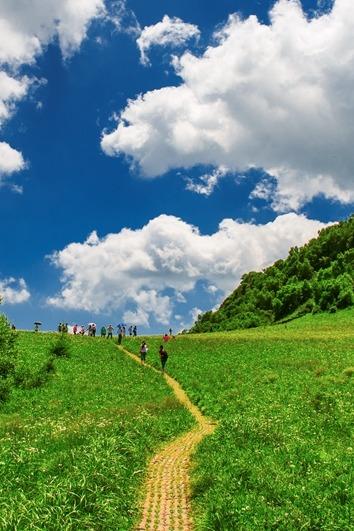 7月9日周六北京最美高山草甸,曲径通幽百花山