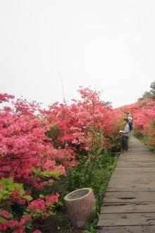 2015年5月3日麻城龟峰山观杜鹃花