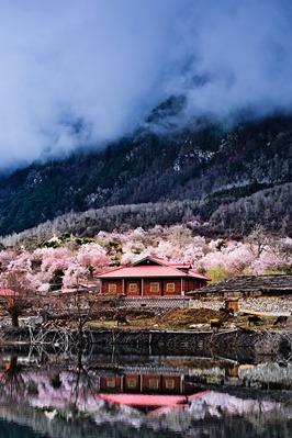 【我为桃花狂】追寻冰川世界里的桃花源秘境!