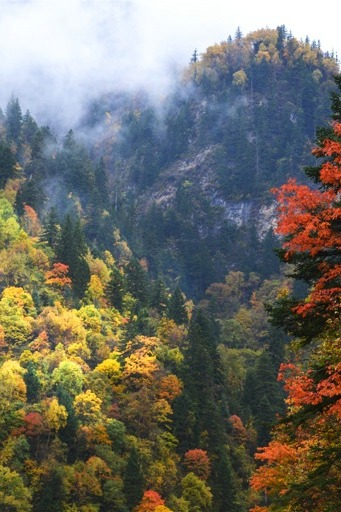 亚洲最大彩叶林观光长廊—黑水奶子沟(10月24-25日)