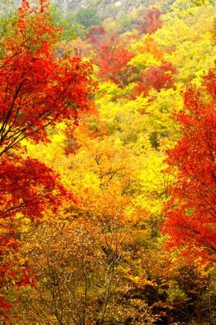 9.23-25 好色的秋天——东猴顶 十里仙境