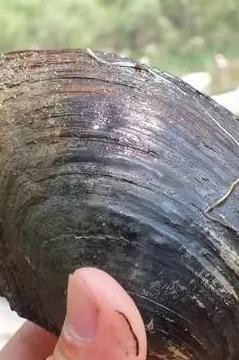 8.6周六捧河湾捞河蚌适合新人