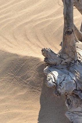 4月17日天漠沙漠-柳沟豆腐宴-永宁古城一日休闲游