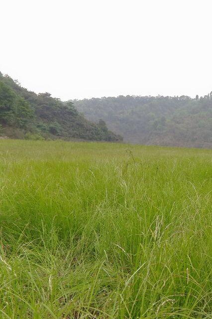 【初级徒步】海子山湿地徒步踩草草