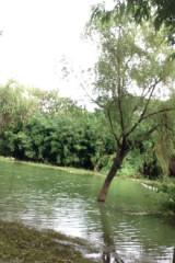 8月14日花桥至千灯古镇15公里徒步活动