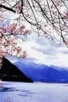 阳春三月,我们一起去找寻最美桃花绽放的光阴