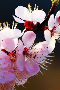 【阳光大队】3.22周天走进托克逊迎春赏花休闲摄影徒步