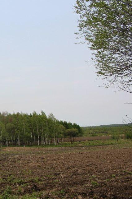游蓝莓基地