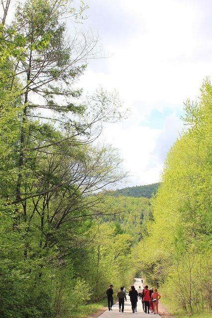 大森林户外活动通知