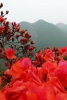 4月10日穿越天露山赏漫山红杜鹃