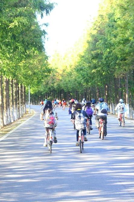 3.11  横沙岛欢快骑行,低碳环保!