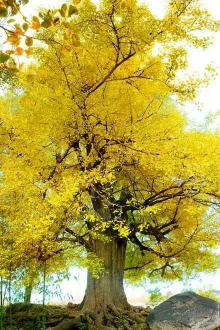 10月23日(周日)银树沟一日游