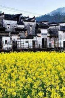 3月5、6日江西婺源油菜花露营摄影