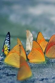 9.12相聚传说中的溯溪圣地 寻找蝴蝶梦幻之旅