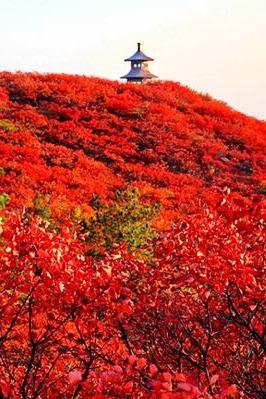 唐河到桐柏黄岗看红叶加叶家大庄