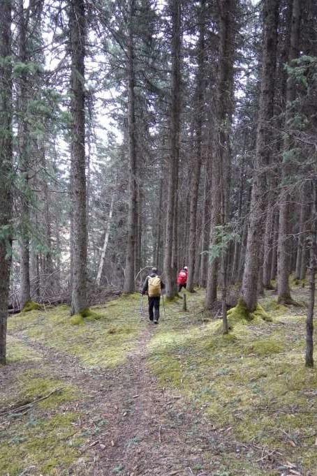 大通向化乡到桦林乡原始森林18公里穿越活动