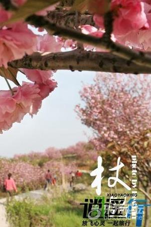 【逍遥行】2015.3.29周日(第二期)四明山看漫天樱花