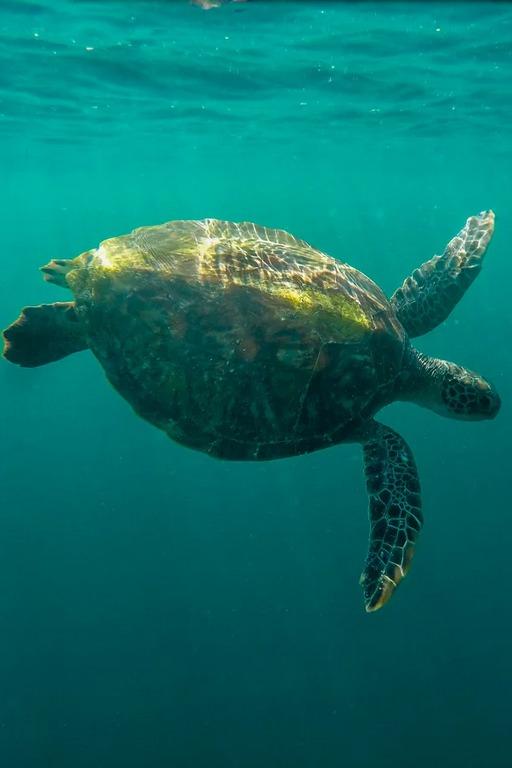 去仙本那浮潜亲吻海龟