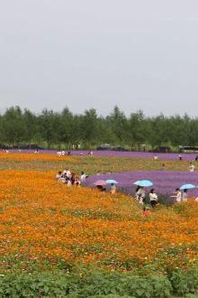 6月13日玉环湿地公园花海、海上长城休闲一日游特价110元