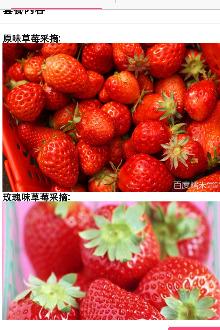 草莓采摘,内江大自然一日游亲子活动