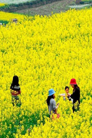 春季踏青特价90元东莞莲湖油菜花、松山湖休闲一天