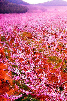 春天来啦~我们一起去看花海!相遇属于自己的桃花!