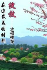 【浪漫之旅】2月13日永福赏万珠樱花清新茶园一日游