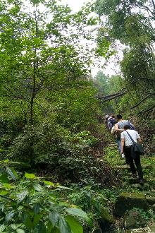 【挑战50km登山】穿越中梁山脉—回到歌乐山