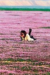 鄱阳湖迷人花海草原