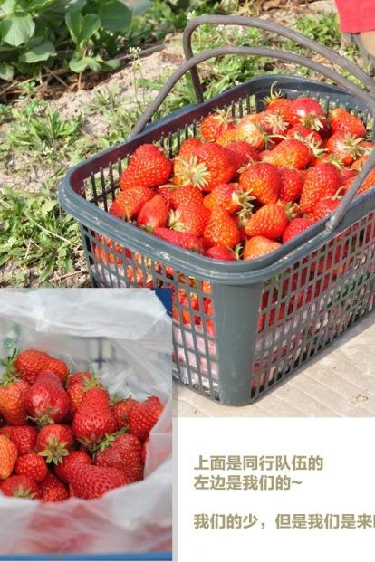 2月21日建湖上冈自驾游摘草莓