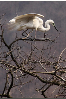 3月27日骑行增家寨观看白鹭归巢
