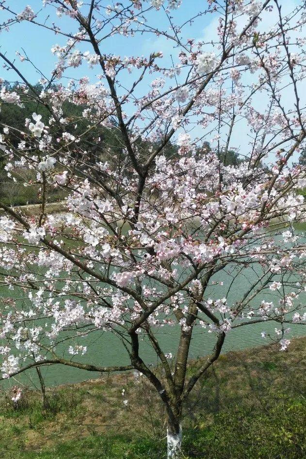 【3月28日】香草世界赏花一日游