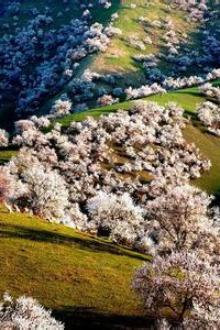 3.28日赏杏花休闲一日游。