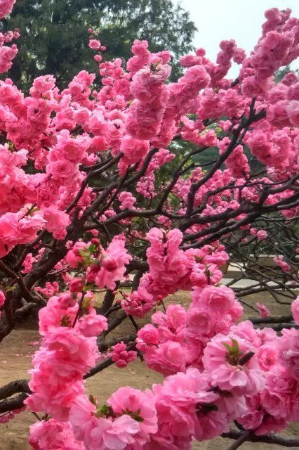 【环球旅行俱乐部】 香山好汉坡到北京植物园