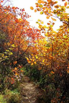 云梦山观景观红叶