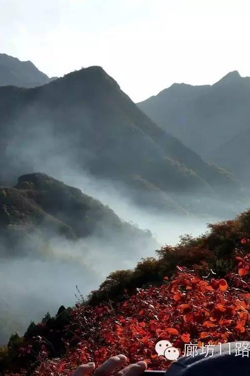 幽岚山看最美红叶,霜叶红于二月花。