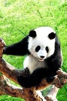 6月11日 去休宁看熊猫 采杨梅 亲子一日游