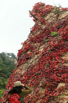 大汪观红叶攀百丈崖