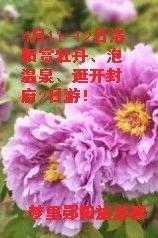 4月11日洛阳赏牡丹、泡温泉、逛开封府2日游活动公告