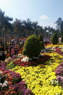上午灯塔公园赏菊,下午台湾民俗村烧烤