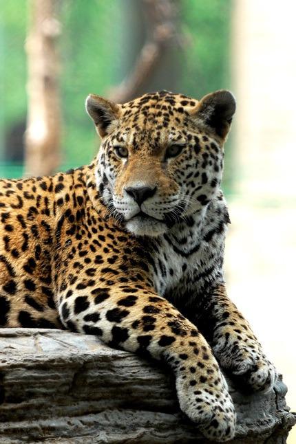 燕郊出发 10月3日 大兴野生动物园一日游