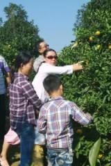 金盘农湾的果粒橙熟了,周末咱们一起摘橙子去吧