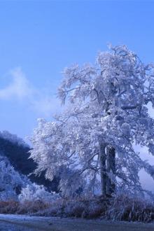 我和瑤乡有个约定 春节罗溪雪峰山瑤寨原生态三日活动