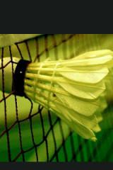 7月31周日晚上七点羽毛球活动