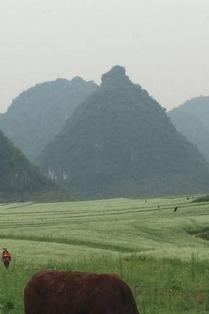 隆安更望湖荞麦花海布泉河