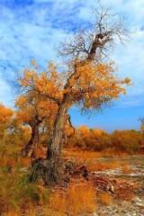 10月3日西游户外带您古尔图胡杨林赏秋景