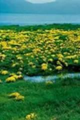 都兰县,阿拉克湖,国际猎场,户外徒步游玩