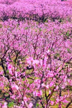 3月21日领略白云山冰臼奇观、赏虎头村千亩桃花一日游