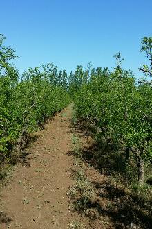 ??认领果树,体验田园生活!